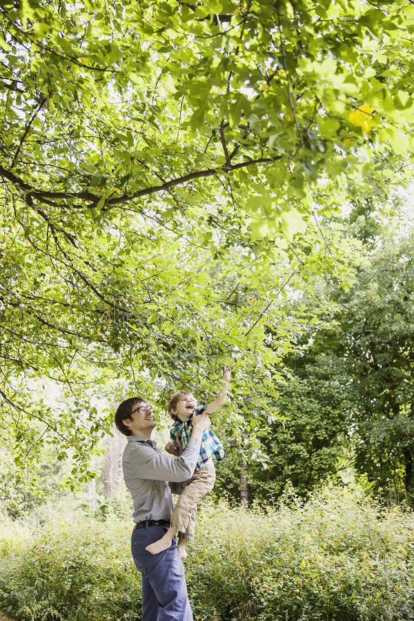 Father and son exploring nature. Father lifting son to look at leaves on a tree stock images