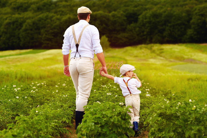 Father and son farmers walking along the potatoes rows among green fields royalty free stock photos