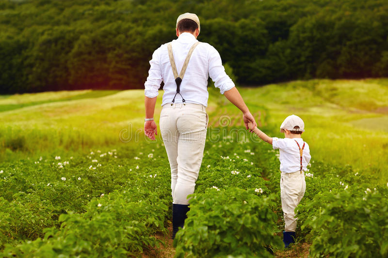 Father and son farmers walking along the potatoes rows among green fields stock photos