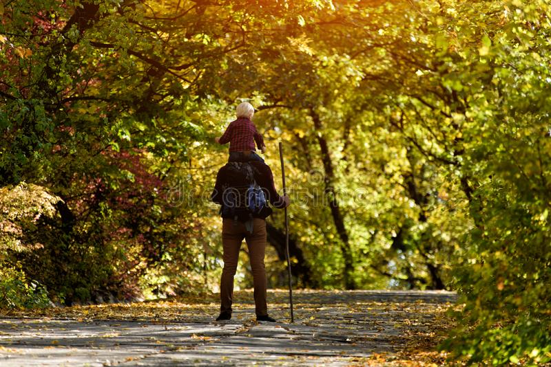 Father with son on his shoulders walking in the autumn park. Sunny day. Back view stock photos