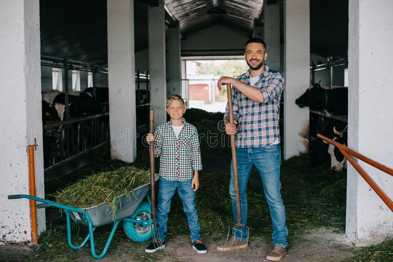 father and son holding pitchforks and smiling at camera while working together stock images
