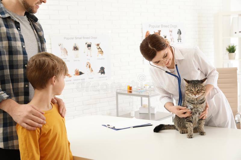 Father and son with their pet visiting veterinarian. Doc examining cat stock photos