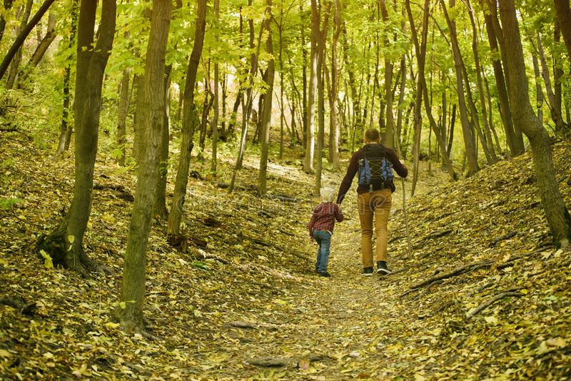 Father and son walking in the autumn forest. Back view stock image