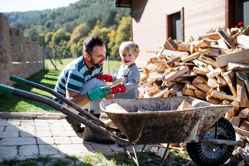A father and toddler boy outdoors in summer, putting firewood in wheelbarrow. royalty free stock photo