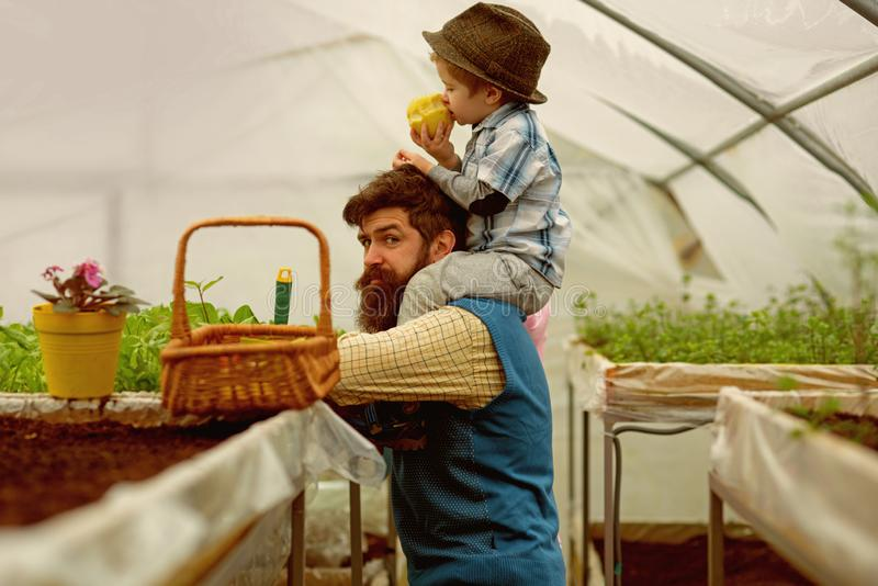 Fathers day. happy fathers day. fathers day holiday. father and son in greenhouse at fathers day. hello. Fathers day. happy fathers day. fathers day holiday royalty free stock photo