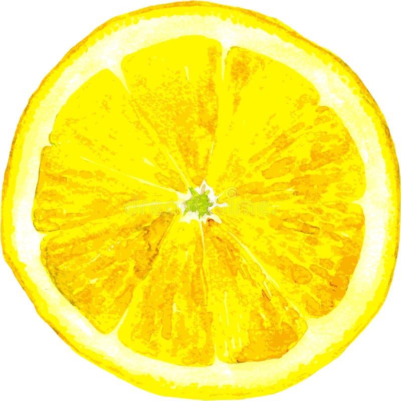 Fatia de desenho do limão pela aquarela ilustração stock