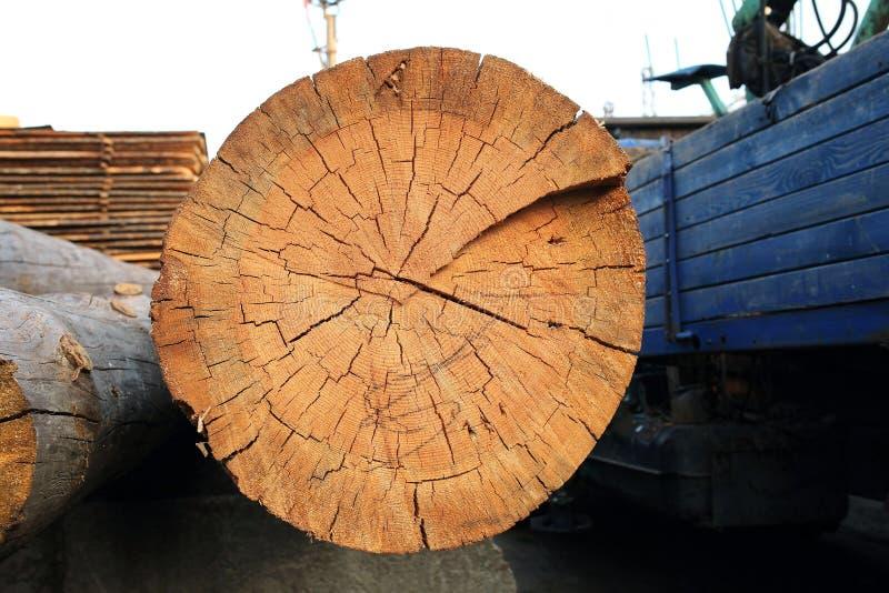 fatia do log de madeira imagens de stock