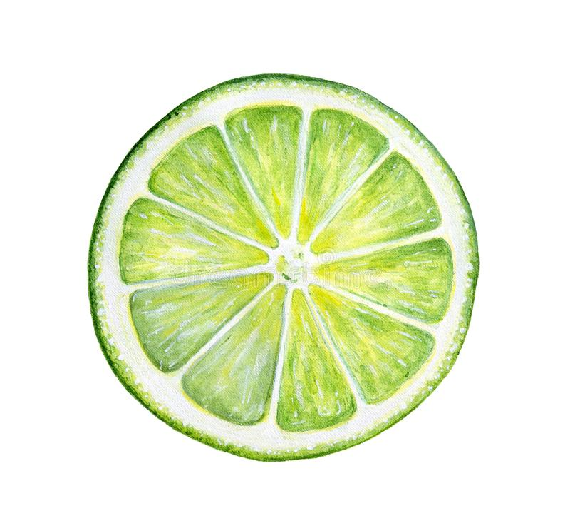 Fatia redonda de cal fresco verde fotografia de stock royalty free