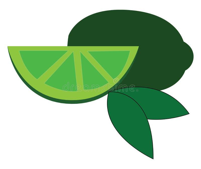 Fatia verde de cal com ilustração vetorial de folhas verdes ilustração do vetor