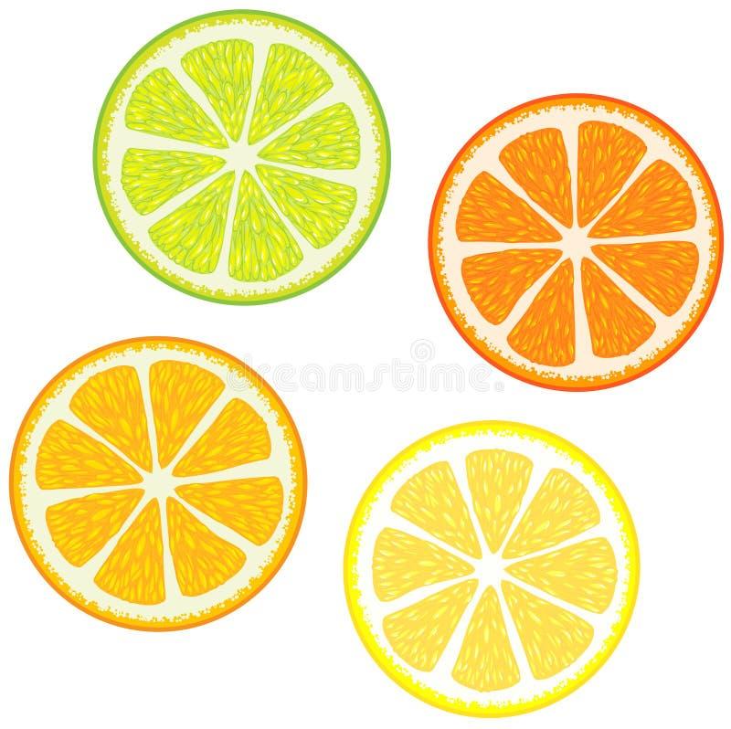 Fatias de citrinas ilustração stock