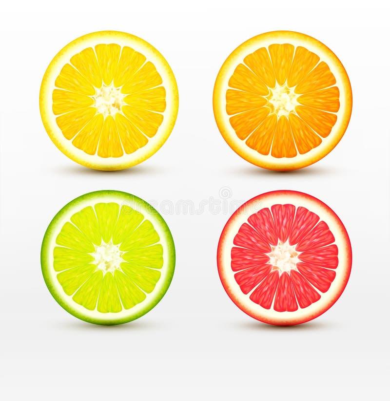 Fatias de laranja, toranja, cal, limão isolado ilustração royalty free