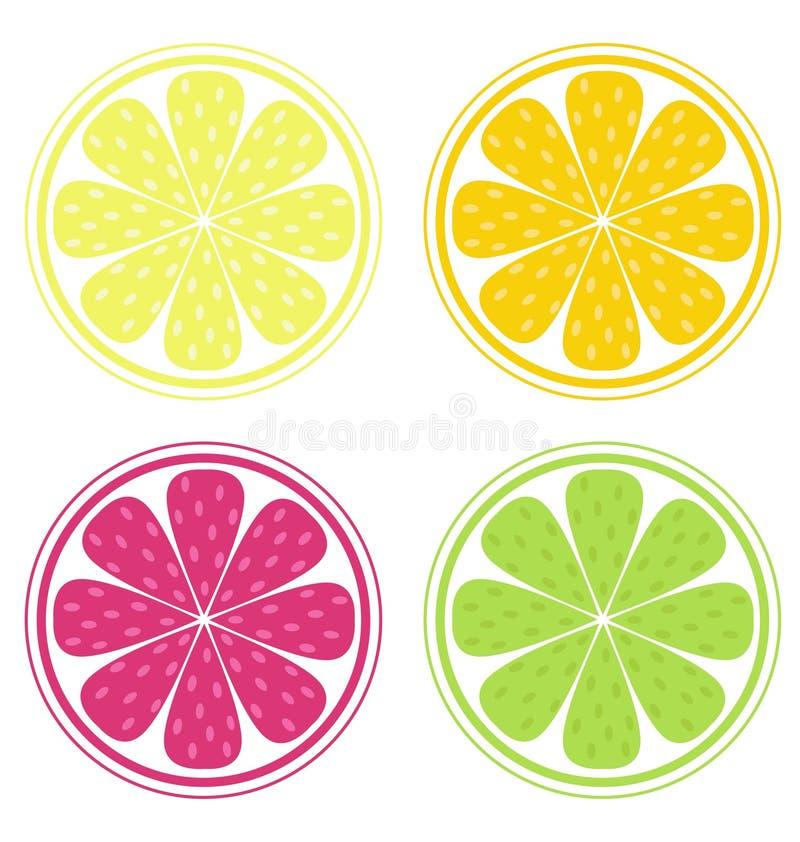 Fatias do citrino ilustração royalty free