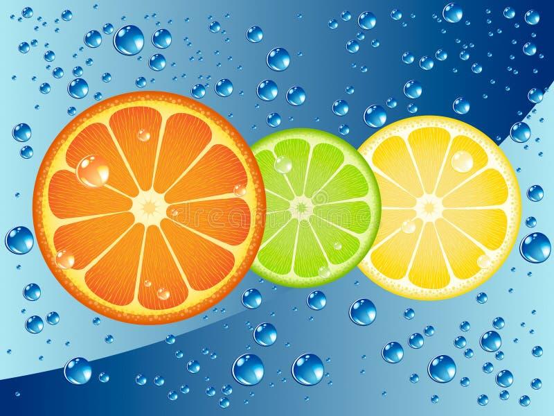 Fatias dos citrinos ilustração stock