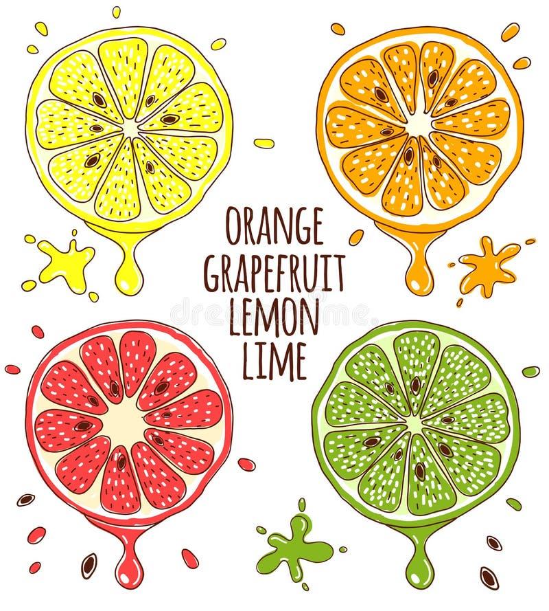 Fatias dos frutos frescos Limão e cal, alaranjados ilustração royalty free