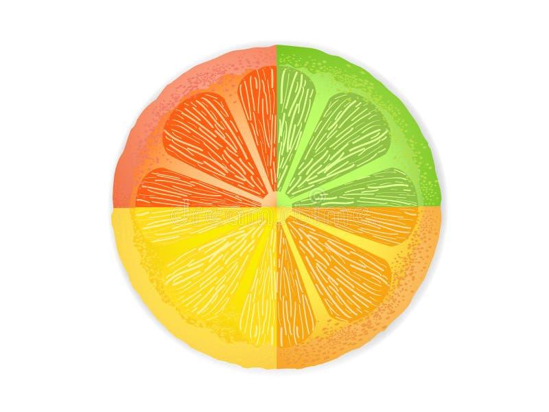 Fatias misturadas dos citrinos ilustração stock