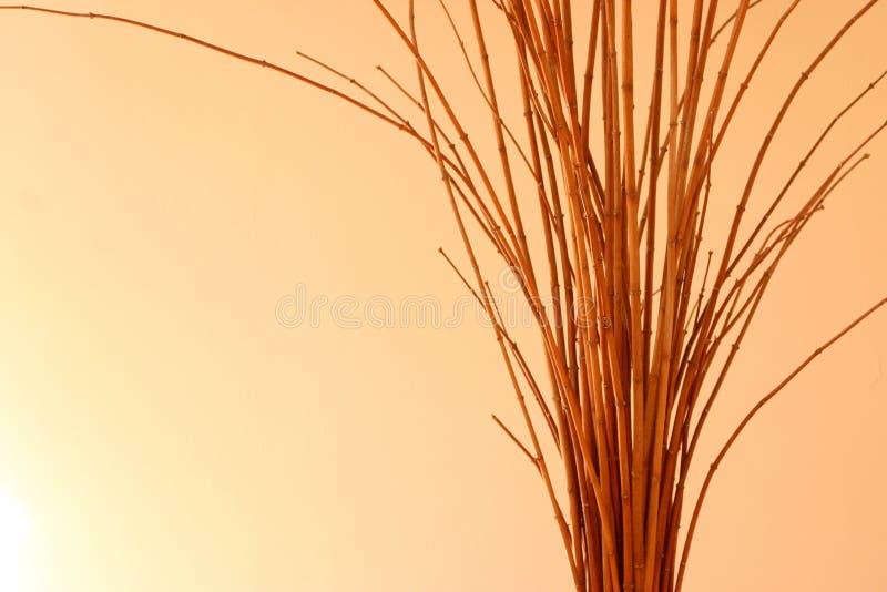 Download Fatta arkivfoto. Bild av fatta, riktning, tree, undersök - 41450