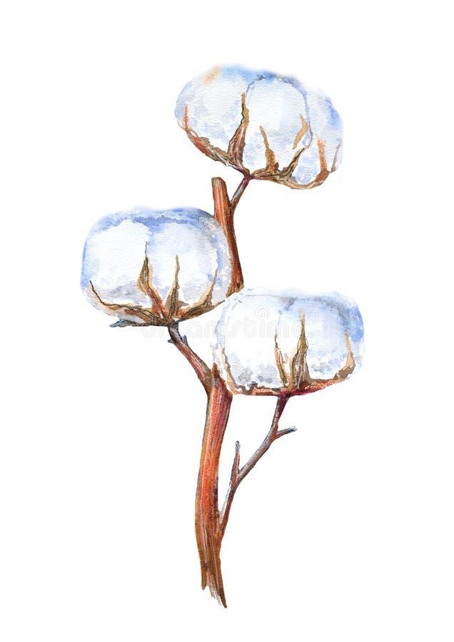 Fatta av blommor för en bomull på en vit bakgrund vektor illustrationer