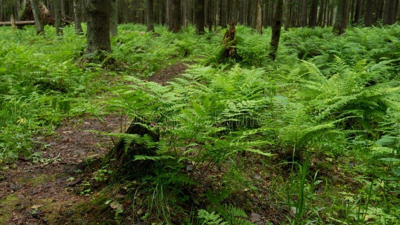 Fatta av en växt i mitt av en gammal skog fotografering för bildbyråer