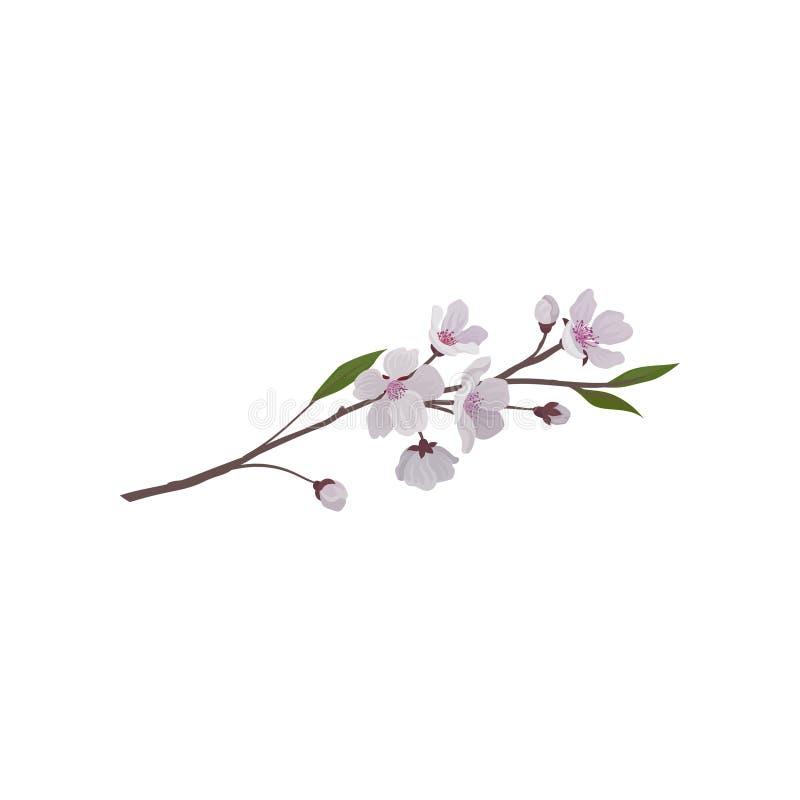Fatta med rosa blommor och gröna sidor Filial av fruktträdet Körsbärsröd blomning Trees som växer från laken, bevattnar Detaljera royaltyfri illustrationer