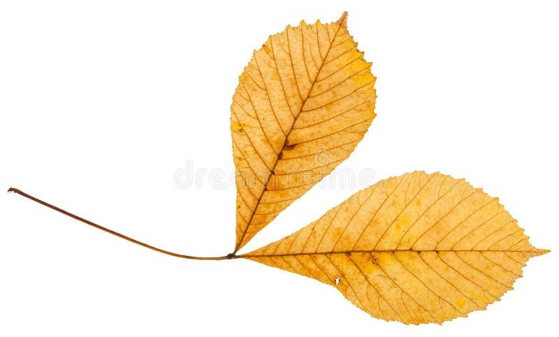 fatta med två gula sidor av kastanjebrunt träd för häst fotografering för bildbyråer