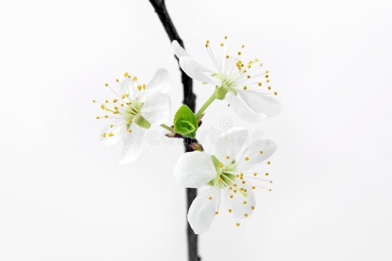 Fatta med vita blommor på vit bakgrund arkivfoto