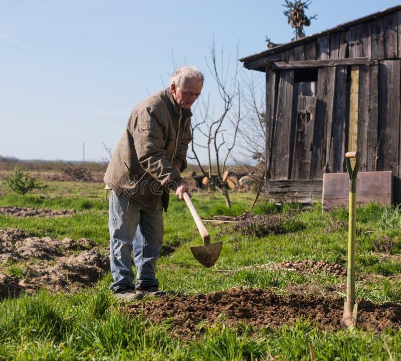 Fattig bonde som hackar grönsaken royaltyfria bilder