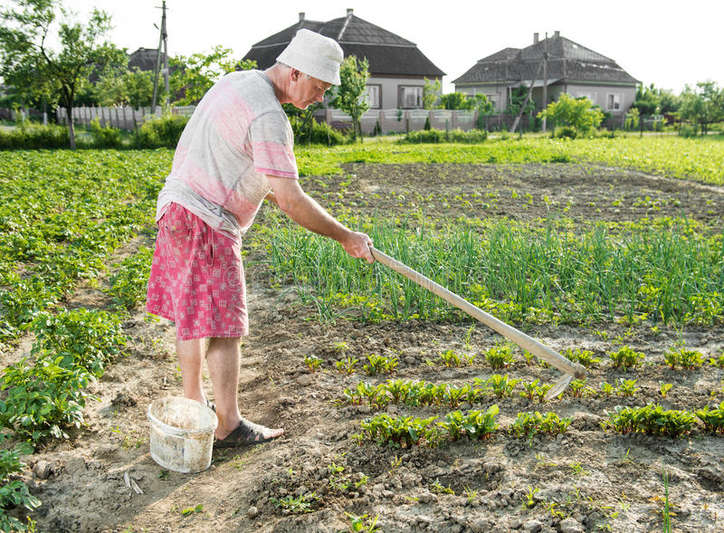 Fattig bonde som hackar grönsakträdgården royaltyfri bild