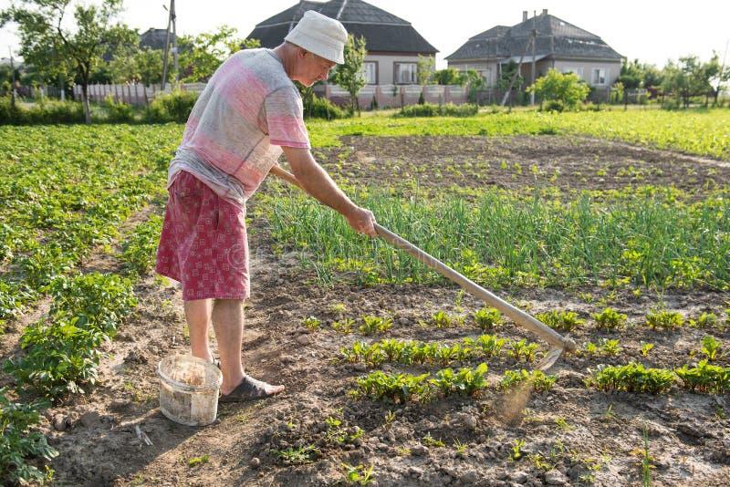 Fattig bonde som hackar grönsakträdgården fotografering för bildbyråer