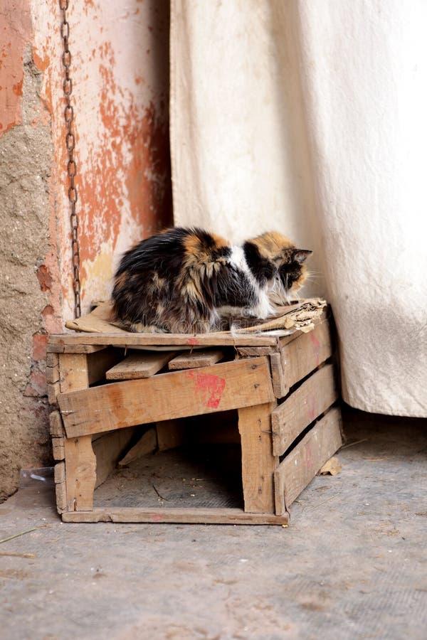 Fattig och dåligt tillfällig katt royaltyfri bild
