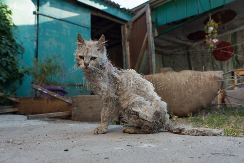 Fattig och sjuk katt royaltyfri fotografi