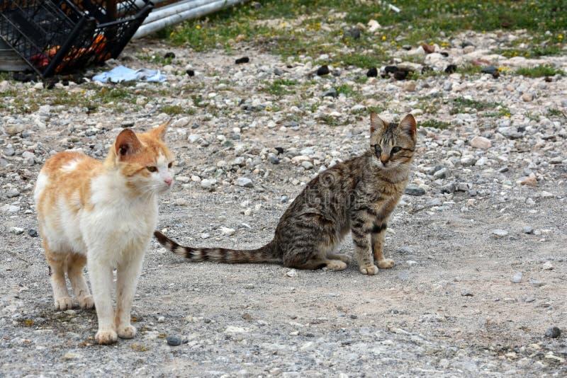 Fattiga tillfälliga katter royaltyfri foto