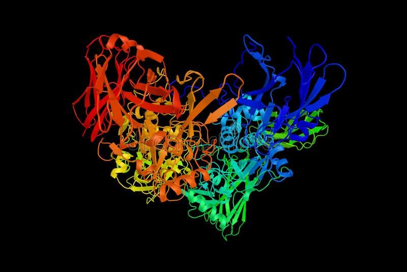 Fattore di coagulazione XIII, o fattore di stabilizzazione della fibrina, un enzima immagini stock libere da diritti