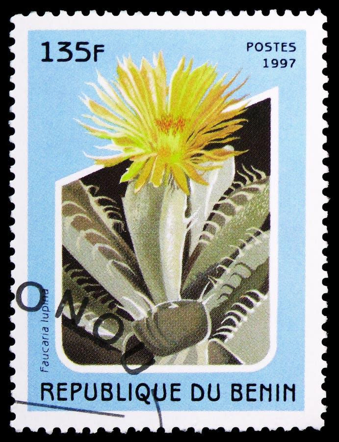 Faucaria lupina,仙人掌serie,大约1997年 库存图片