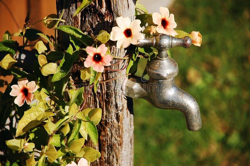Faucet и цветки стоковое фото rf