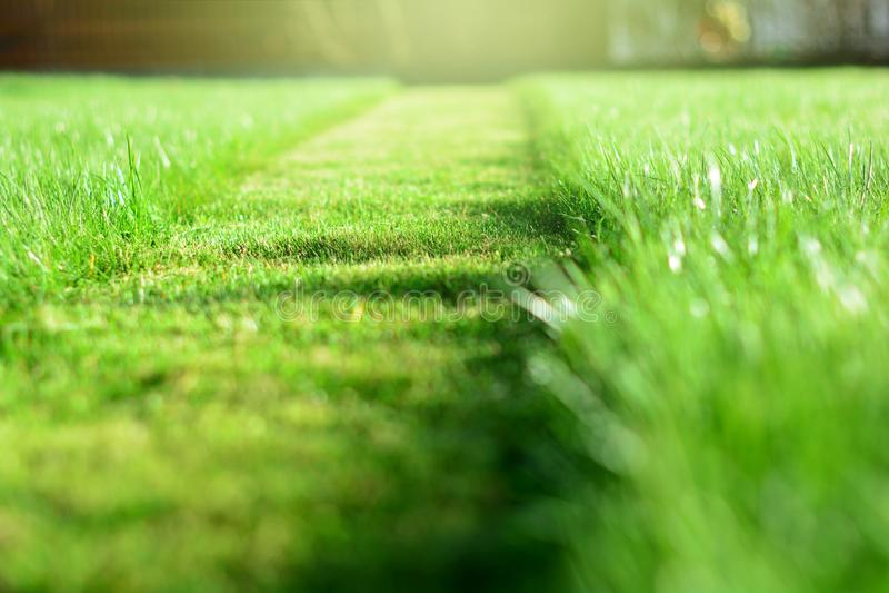 Fauchage de la pelouse Une perspective de bande de coupe d'herbe verte Selecti photo libre de droits