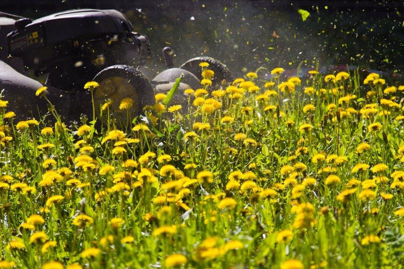 Fauchage de pelouse image stock