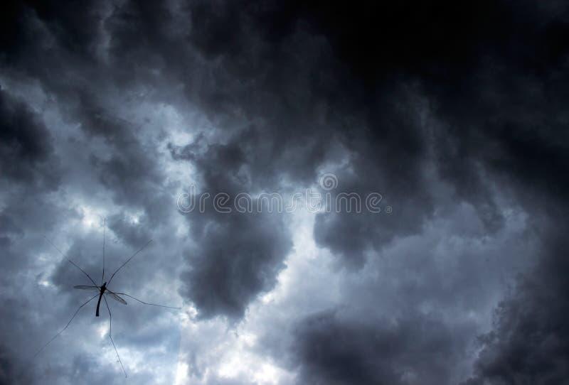 Faucheur d'insecte de moissonneur aka sur la fenêtre avec le ciel photo libre de droits