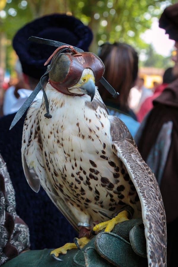 Faucon à capuchon avec le capot en cuir images libres de droits