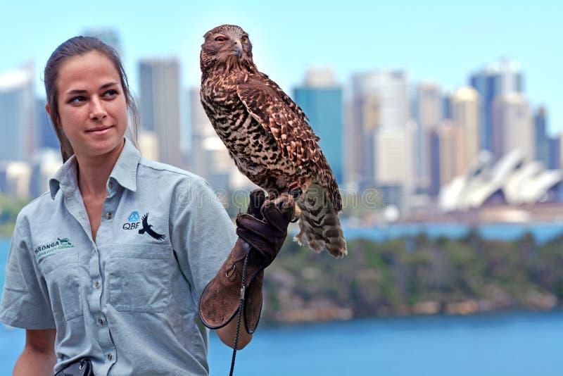 Faucon de Brown dans le zoo Sydney New South Wales Australia de Taronga photos libres de droits