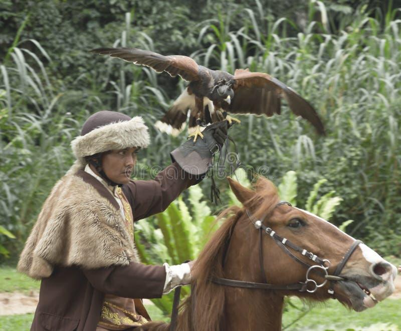 Faucon et cavalier image libre de droits