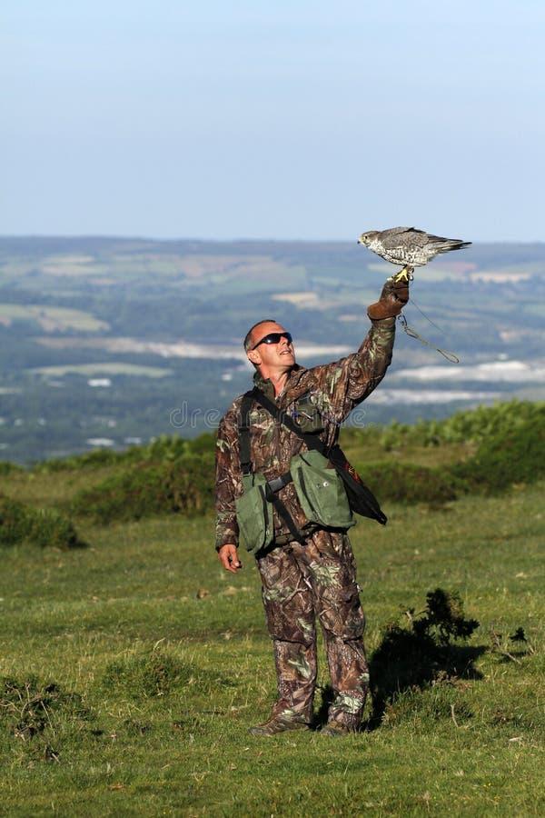 Faucon sur la main de fauconniers images libres de droits