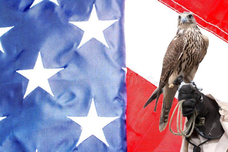 Faucon sur la main de manipulateurs sur le drapeau des USA photographie stock