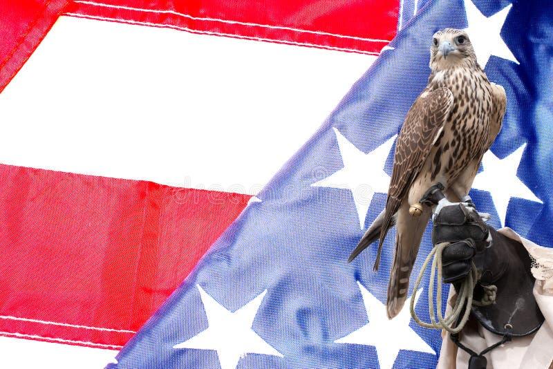 Faucon sur la main de manipulateurs sur le drapeau des USA images libres de droits