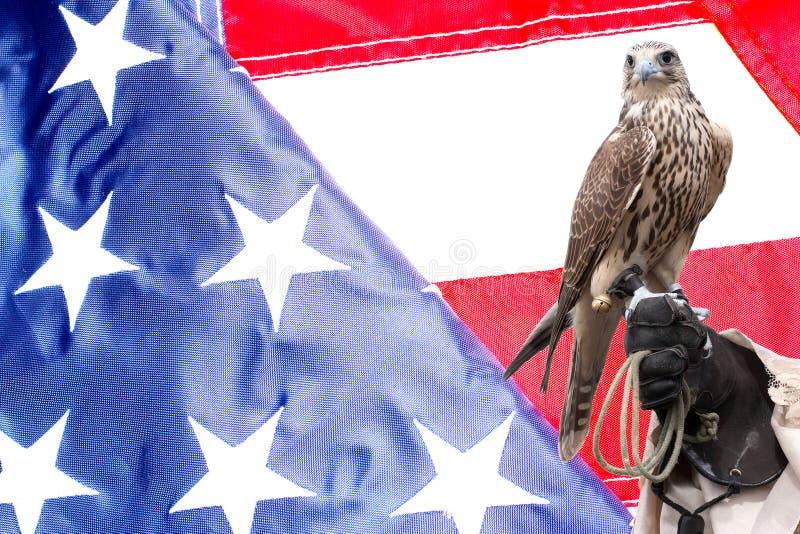 Faucon sur la main de manipulateurs sur le drapeau des USA images stock