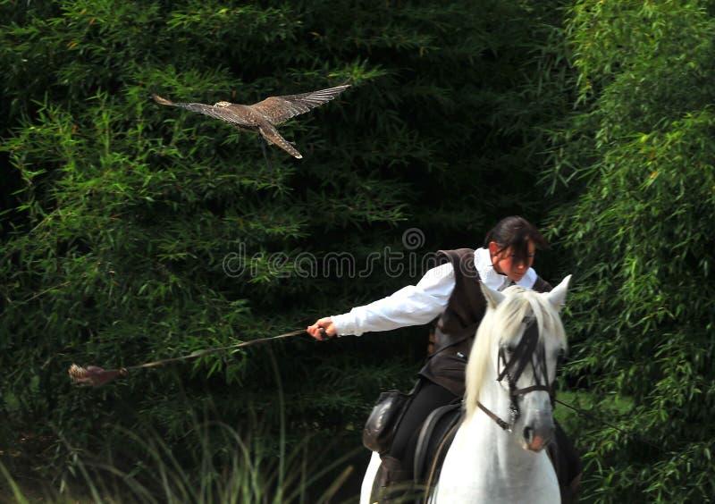 Fauconnerie à cheval photos libres de droits