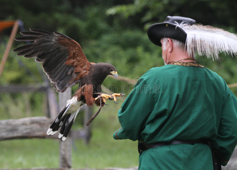 Fauconnerie dans l'action avec l'homme, le faucon et les jesses photographie stock libre de droits