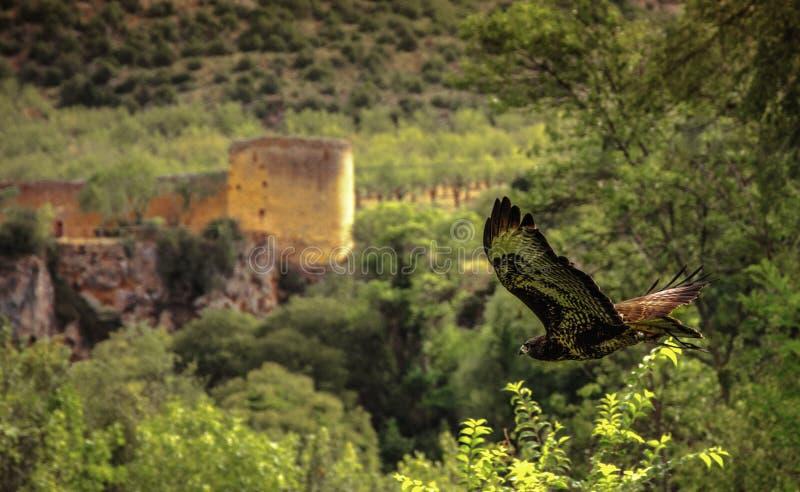 Fauconnerie dans Monasterio de piedra photos libres de droits