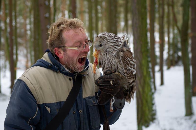 Fauconnier affamé avec le hibou fauve sur son gant, mangeant la récompense de poulet images libres de droits