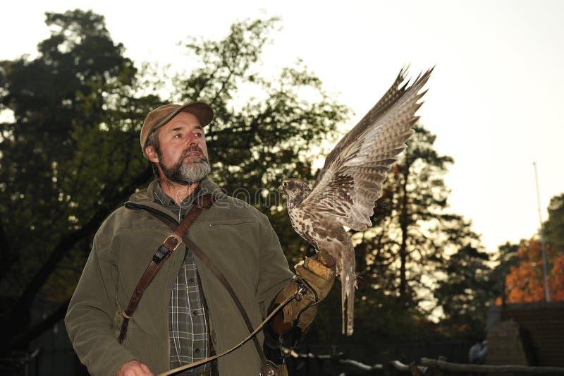 Fauconnier avec le faucon, cherrug de falco. images libres de droits