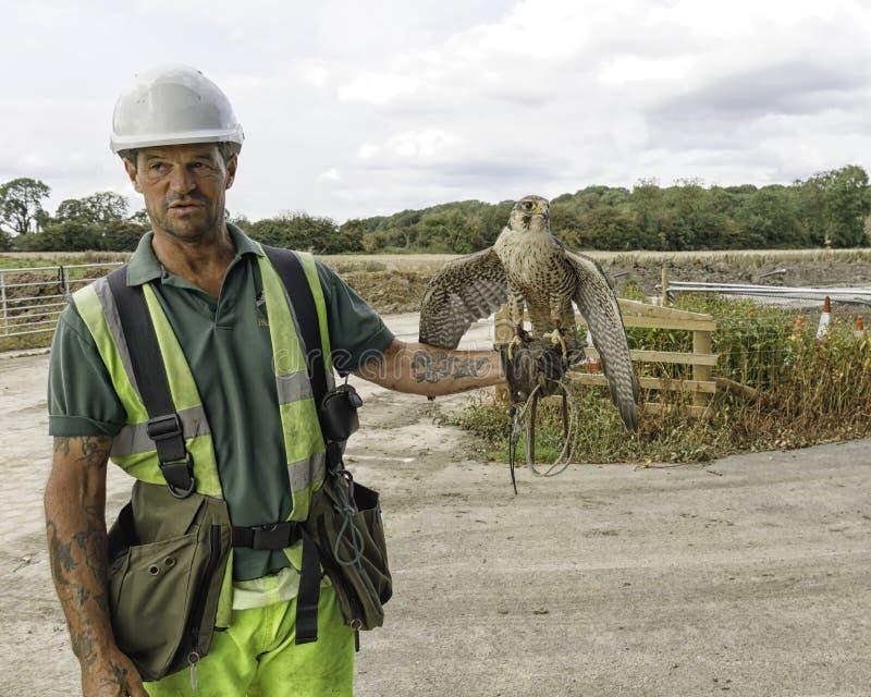 Fauconnier avec les oiseaux de travail photos stock
